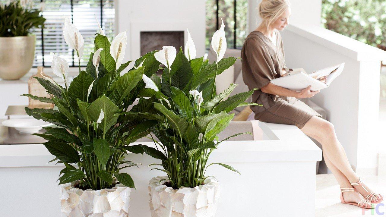Как выбрать комнатное растение: помогут народные приметы