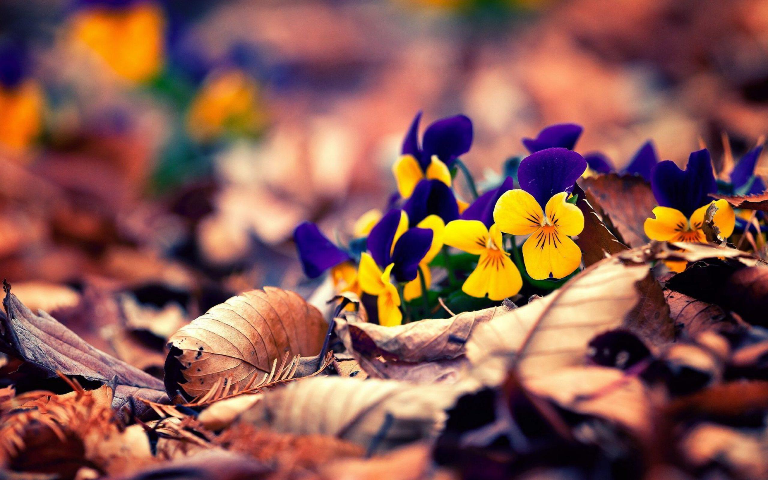 20 цитат про осень, которые хороши в любую погоду