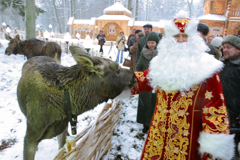 Новый год в Белоруссии 2016 год